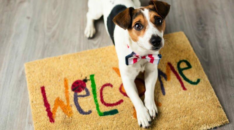 pet friendly-prepare-sua-loja-para-receber-os-pets-clube-das-comadres