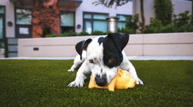 5 brincadeiras para divertir o seu pet em casa - Clube das Comadres