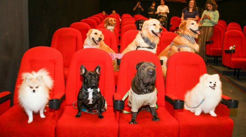 Cães celebridades invadem cinema com suas mães - Clube das Comadres