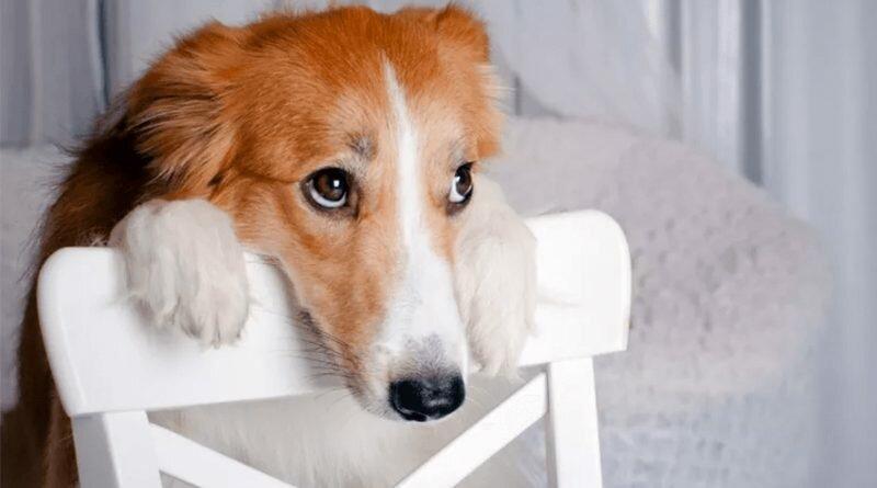 Broncas-cachorro-culpa-treinamento