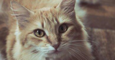 Poder dos gatos, que têm espiritualidade aguçada
