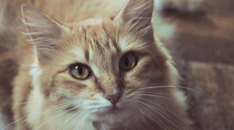 poder dos gatos-seres-misticos