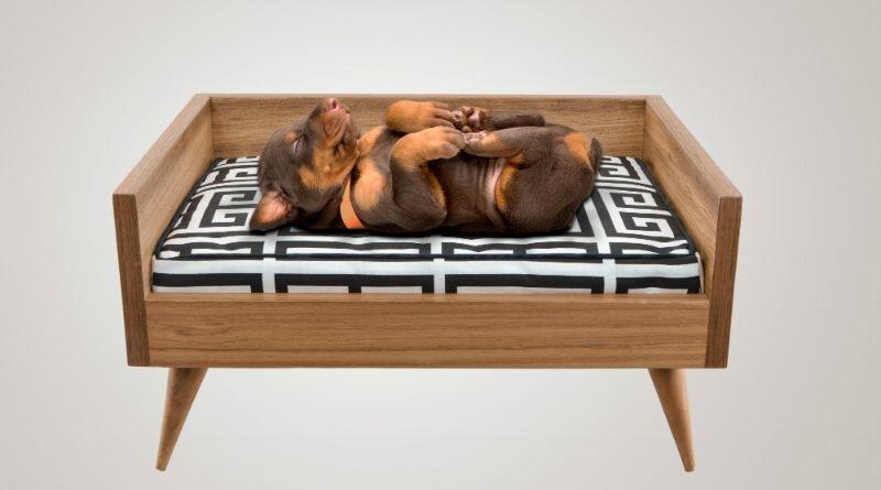 Bicho Fino-móveis-cães-gatos