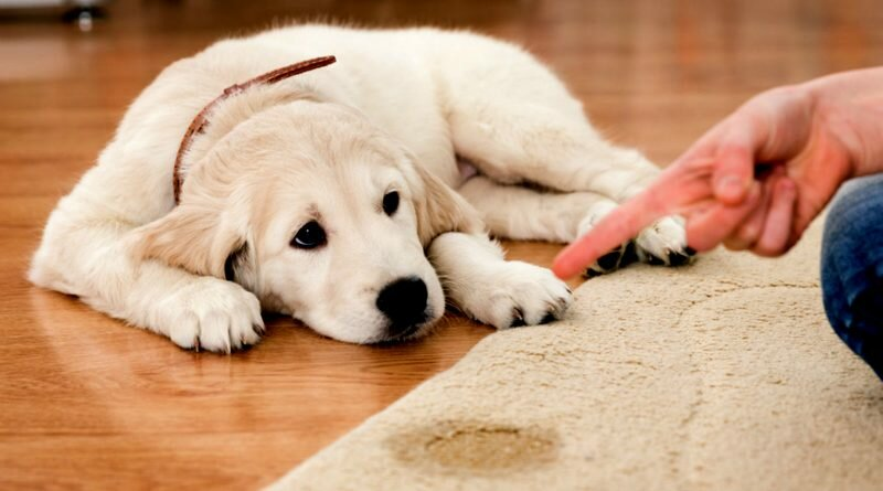 xixi-cachorro-adestramento