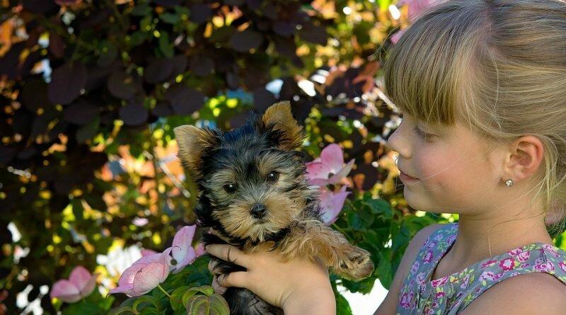 seu filho-cachorro-familia