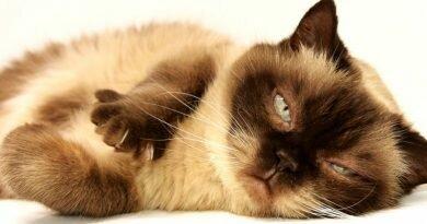 Saúde do gato - cuidados - vacinas