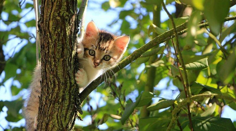 Saidinhas - gatos - perigos - cautela