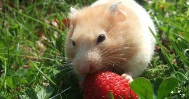5 motivos para ter um roedor de estimação